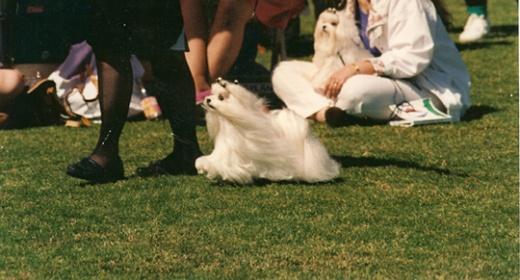 Moving conformation dog