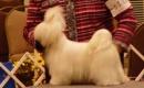 Breed Judging Seminars thumbnail image